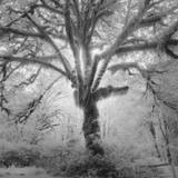 Lightning Tree II Photographic Print by Moises Levy