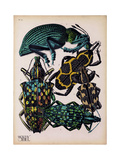 Insects, Plate 6 Giclee Print