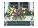 Nantucket Bloom Giclee Print by Bruce Dumas