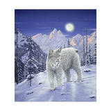 Moonlight Wilderness Giclee Print by Jeff Tift