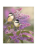 Lilacs and Chickadees Reproduction procédé giclée par William Vanderdasson