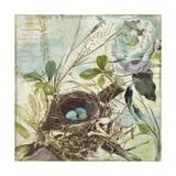 Nesting II Giclee Print
