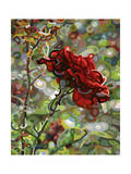 Last Rose of Summer Giclee Print by Mandy Budan
