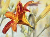 Lily Photographic Print by Karen Williams