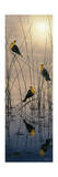 Morning Call - Yellow Headed Blackbirds Giclee Print by Jeff Tift