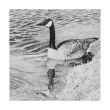 Lone Goose 2 Giclee Print by Rusty Frentner