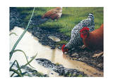 Reflections of Spring Giclee Print by Kevin Dodds