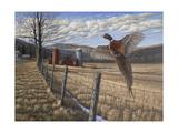 Pheasant Giclee Print by Bruce Dumas