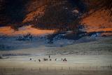 Rusher Ranch Fotodruck von Dan Ballard