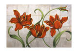 Parrot Tulips Giclee Print by John Zaccheo