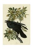 Corbeau Impression giclée
