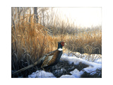 Pheasant Giclee Print by Rusty Frentner