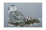 Owl Giclee Print by Rusty Frentner