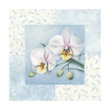 Orchid 2 Giclee Print by Lisa Audit
