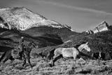 Roping the San Greys Fotodruck von Dan Ballard