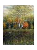 Reflections of Autumn Reproduction procédé giclée par Kevin Dodds
