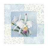 Orchid 1 Giclee Print by Lisa Audit