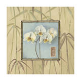 Orchid Spa 4 Giclee Print by Lisa Audit