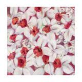 li bo - Orange Flame Daffodil - Giclee Baskı