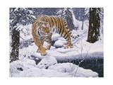 Silent Hunter- Siberian Tiger Giclee Print by Jeff Tift