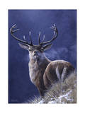 Stag Giclee Print by Jeremy Paul
