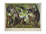The Monkeys Giclee Print