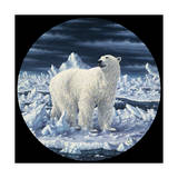 Polar Bear Giclee Print by Jeff Tift