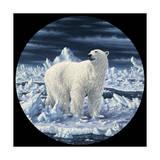 Polar Bear Giclee Print by Jeff Tift
