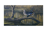 Spring Pair - Wood Ducks Giclee Print by Wilhelm Goebel