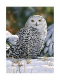 William Vanderdasson - Snowy Owl Digitálně vytištěná reprodukce