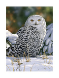 Snowy Owl Giclee Print by William Vanderdasson