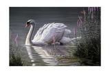 Summer Idyll - Mute Swan Giclee Print by Wilhelm Goebel