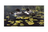 Shoreline Refuge - Loon Family Impression giclée par Wilhelm Goebel