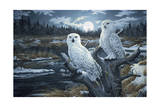 Snowy Owls Giclee Print by Jeff Tift