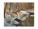 Quinnipiac River White Tails Giclee Print by Bruce Dumas