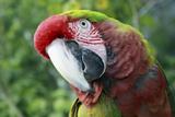 Quizacle Parrot Stampa fotografica di Karen Williams