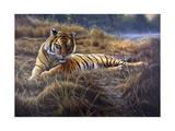 Tiger Wydruk giclee autor Jeremy Paul
