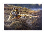 Tiger Giclee Print by Jeremy Paul