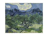 Van Gogh, Olive Trees Giclee-vedos