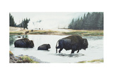 Spirit of Yellowstone Giclee Print by Rusty Frentner