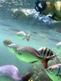 Snorkeling Reprodukcja zdjęcia autor Karen Williams