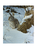 Snow Cover Cottontail Giclee Print by Wilhelm Goebel