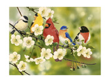 Songbirds on a Flowering Branch Impression giclée par William Vanderdasson