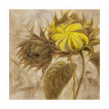 Sunflower II Giclee Print by li bo