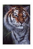 Tiger in the Midst Giclee Print by Jenny Newland