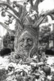 Smiling Tree Fotografisk trykk av Giuseppe Torre