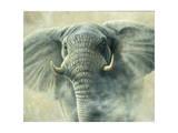 Storm Elephant Giclée-tryk af Jeremy Paul