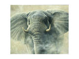 Storm Elephant Giclee Print by Jeremy Paul