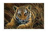 Tiger Cub Giclee Print by Jeremy Paul