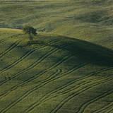 Tuscany IX Photographic Print by Maciej Duczynski